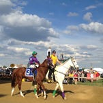 California Chrome, shown in the post parade for the Preakness Stakes, his last dirt victory, will run next on grass in England.