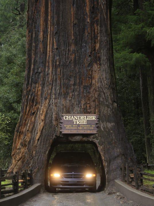 Leggett: In the land of the redwood giants