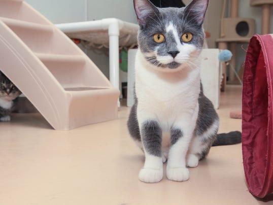 Big Cat Rescue Brevard County Florida
