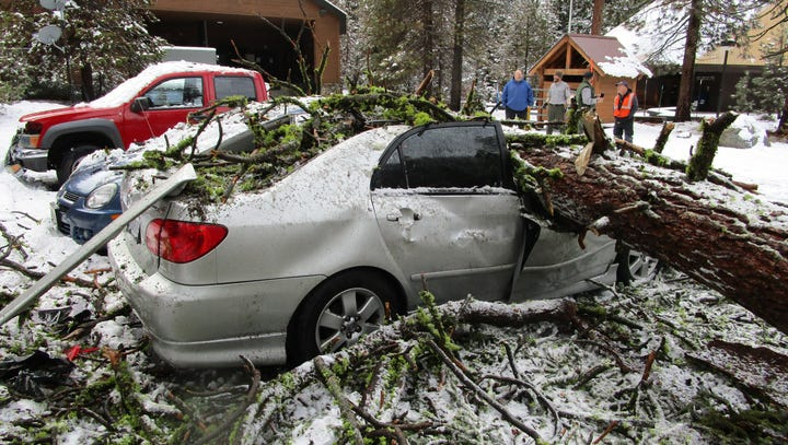 Tree falls in Sequoia National Park, crushes vehicles