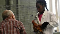 Poultry 4H exhibitors like 12-year-old Garnet Henry can sample the successes and tribulations of agribusiness without living on a farm.