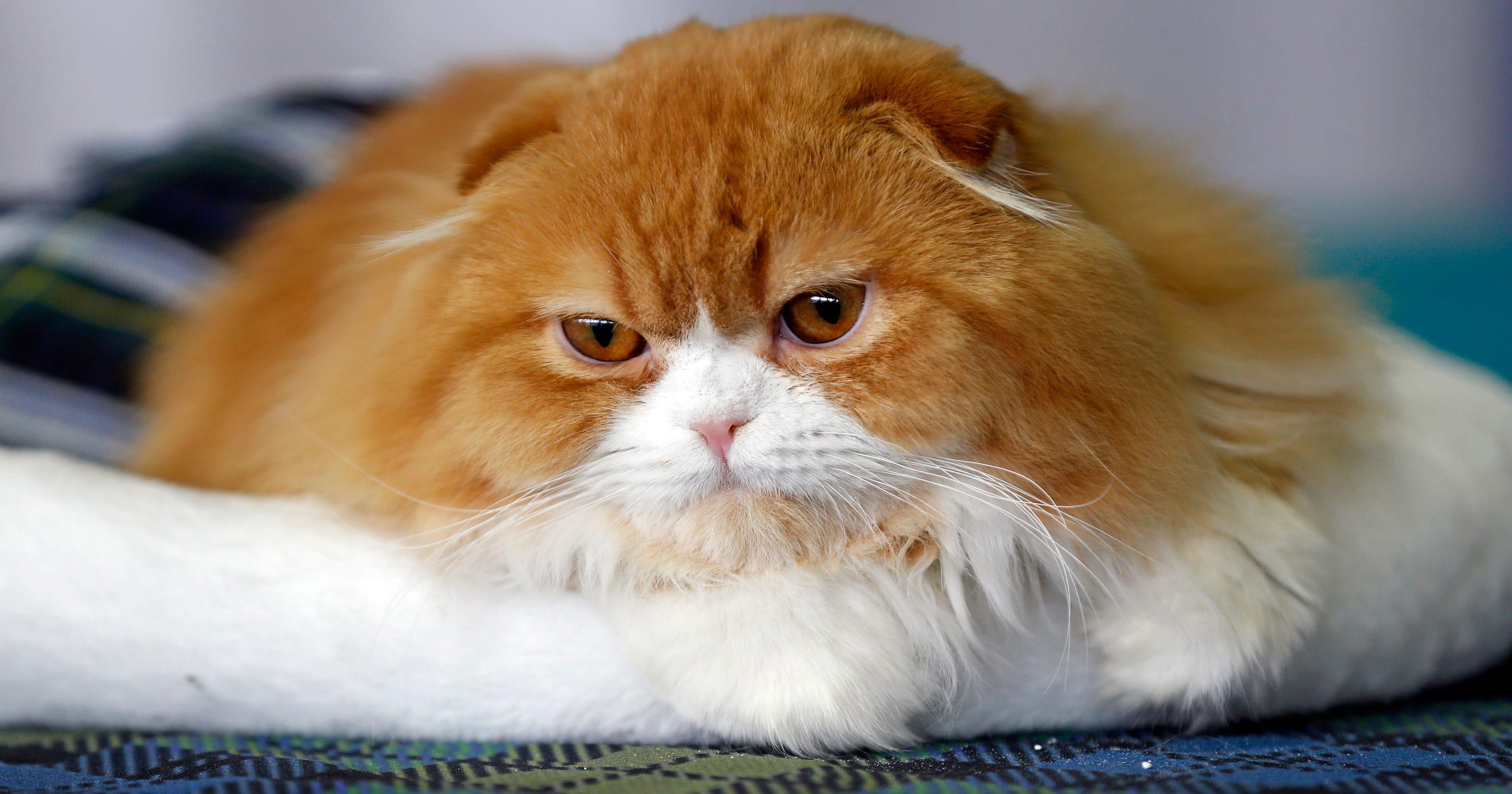 Cat Lasagna Name