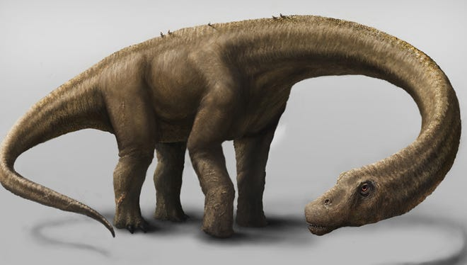 Rendering of the massive Dreadnoughtus schrani in life. Dreadnaughtus had a 37-foot-long neck, 30-foot tail, and weighed an estimated 65 tons, making it the most massive land animal whose size can be confidently calculated.