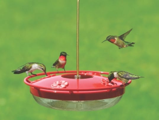 636626887411000279-hummingbirds-on-high-view.jpg