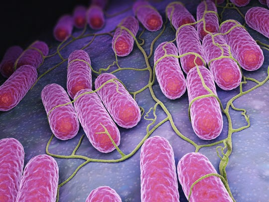 Culture of Salmonella bacteria. 3D illustration.