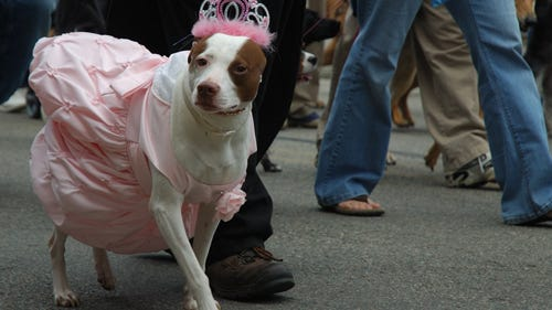 A canine costume contest is part of the festivities at Beacon Barks!