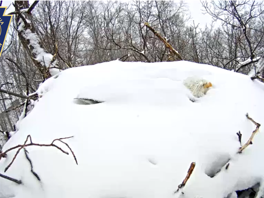 635889953352293932-20150305-120831-eagle-snow.png