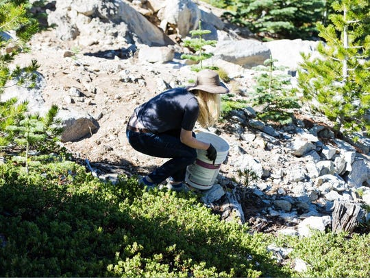 The Sierra-Vapur Hydration Program will launch on Oct. 9, the day of Sierra-at-Tahoe's annual Keep Sierra Clean Day.