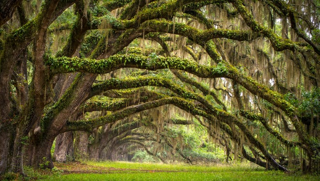 Watching moss dance in the oak trees right before a thunderstorm is one of the many reasons to love the South.
