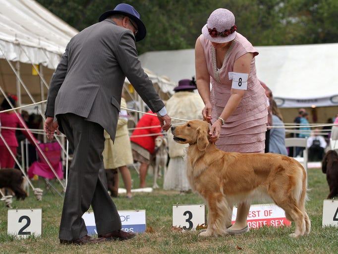 Dog Show Bridgewater Nj