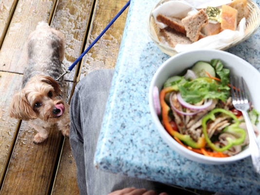 Dining with your dog