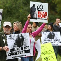 Bear hunting back in the crosshairs