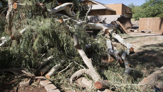 A tree fell at the Enchanted Forest area of the Phoenix Zoo during a monsoon storm on Thursday, Aug. 3, 2017. The zoo was closed Friday for storm cleanup.