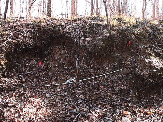 Holes in the ground at the Doskie Mound in Tishomingo County where relics were excavated illegally.
