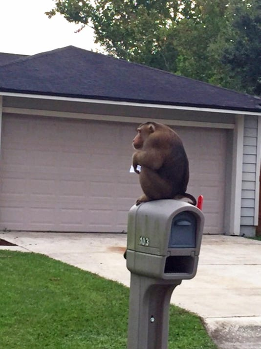 ODD Monkey on the Loose