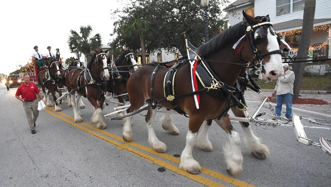 The Budweiser Clydesdales made a full-hitch appearance Dec. 16, 2016, at Marina Square in downtown Fort Pierce. On Feb. 22, the world-famous horses will visit Manatee Island Bar & Grill in Stuart and then in March, will make a stop at Riverside Park in Vero Beach.