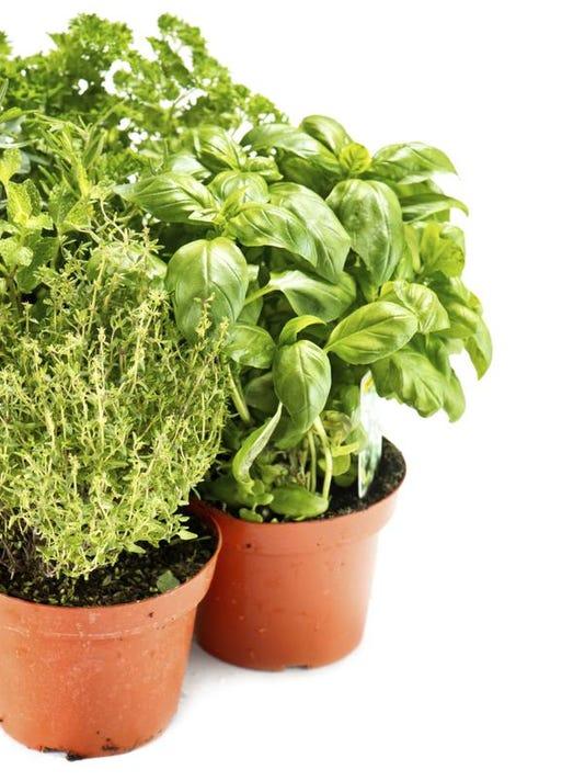 APC f FF family garden grow herbs 0607