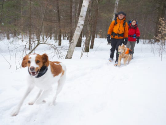 Couple with dogs in snow in winter