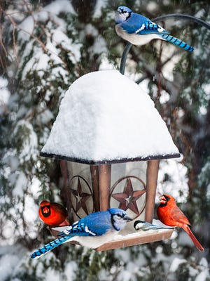 Bird feeder in winter with blue jays and cardinals.