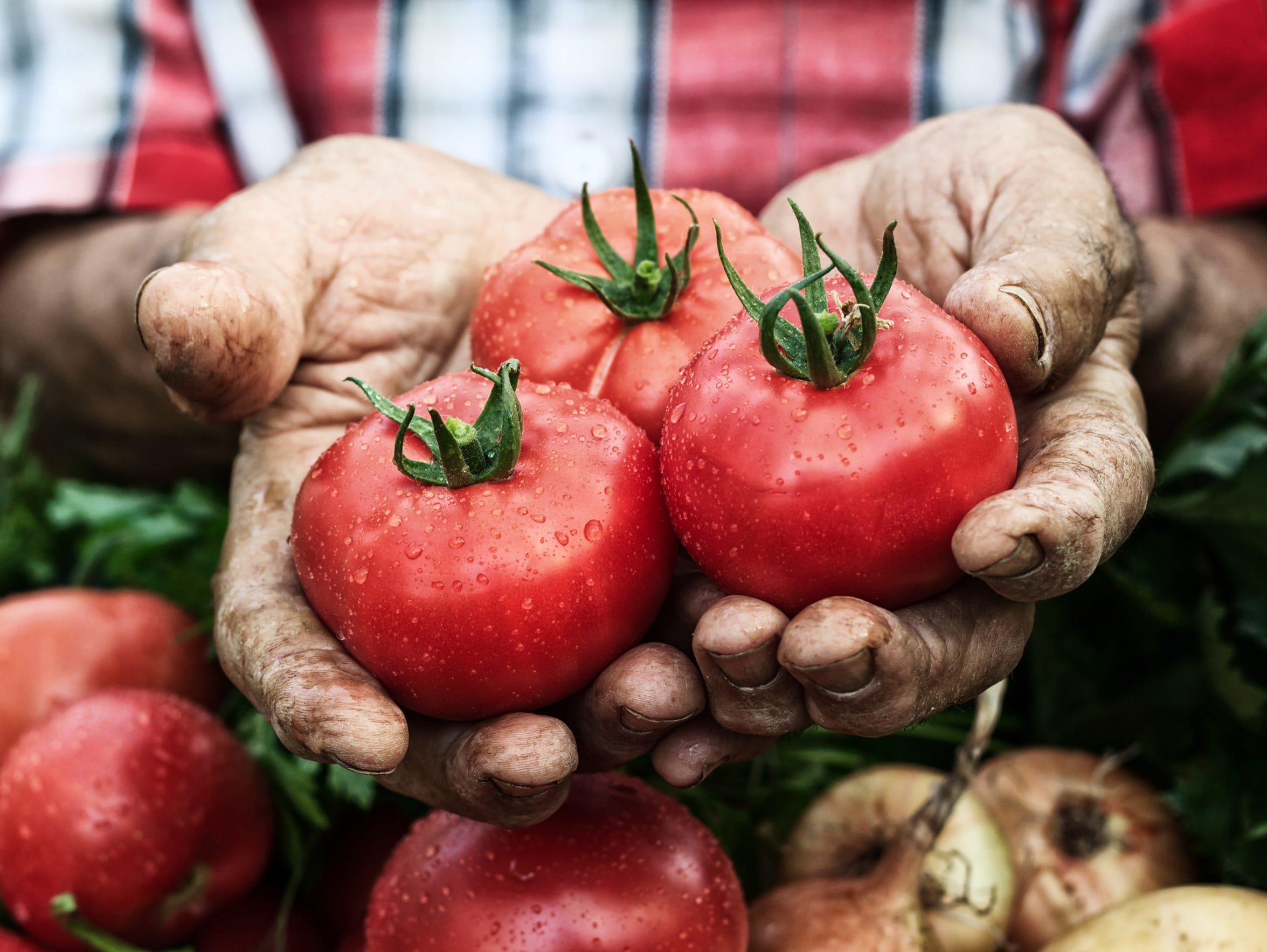 A tomato is a fruit as it develops from a flower and