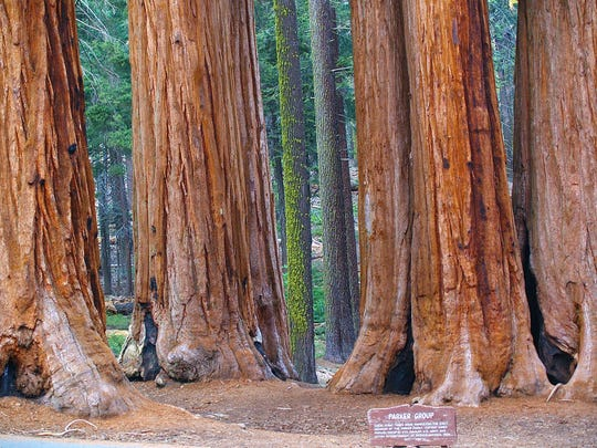 Packwood Group - Sequoia National Park - Photo by Shirley Keller