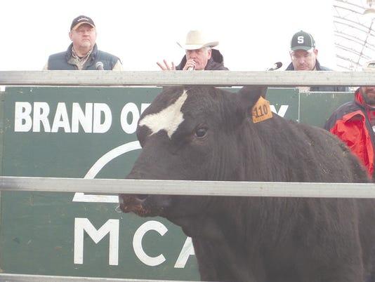 Bull evaluation sale