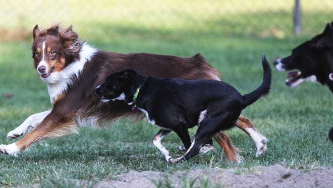 Dogs play at Broad Ripple Dog Park in 2014.