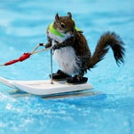 Twiggy the Water Skiing Squirrel to appear at  Detroit Boat Show at Cobo