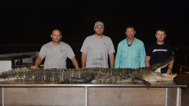 Kevin Brooks, of Tylertown, (from left), Zack Young, of Brandon, Michael Harlow, of Brandon, and David Martin, of Brandon, harvested an 11-foot alligator on the opening night of the season at Barnett Reservoir.