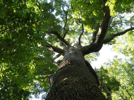 _TREE CANOPY.jpg