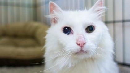 Kimba is nursing some deep heart ache and needs lots of love.