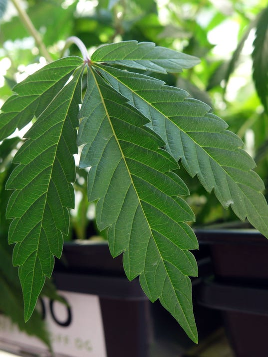 636365353298237580-oakland-marijuana-2017-Hughes-1246.JPG