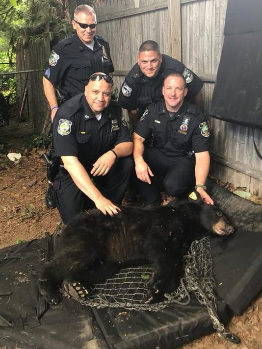 Bear caught in West Haverstraw