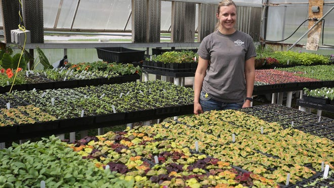 Indianola city horticulturist Angie Buchanan stands with thousands of plants she planted in one of the old city greenhouses near the high school in the spring of 2017.
