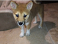 Grande also posted this snapshot of her second adorable pooch, Fawkes, on her Instagram page.