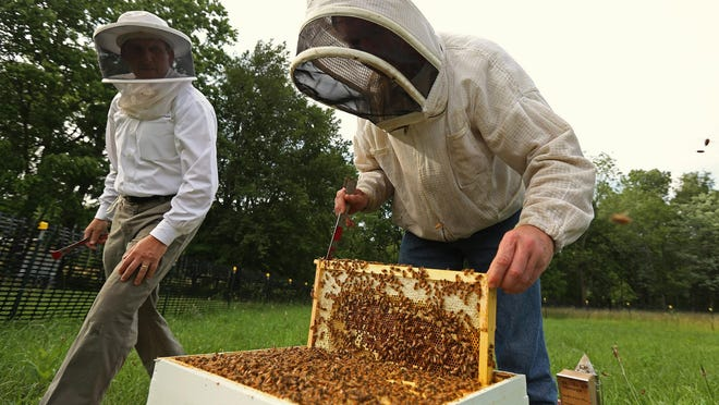 Robert Thomson (left), director of finance for the Indianapolis Airport Authority and a beekeeper, and Mike Seib, president of the White Lick Beekeepers Association, check frames for possible crowding and to monitor the honeybees' progress Monday, June 22, 2015. The airport and the association are working to save honeybees, to give private beekeepers a safe place to raise bees and to educate the public about their importance.