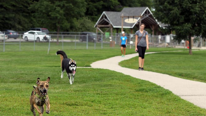 Tiger, front, and Koda take a lap around the Thornberry Off-Leash Dog Park on Monday, July 20, 2015.