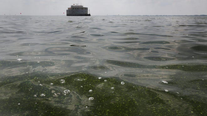 Toledo, however, has not experienced problems so far this summer with microcystis algae, which produces a toxin called microcystin that reached alarming levels last summer.