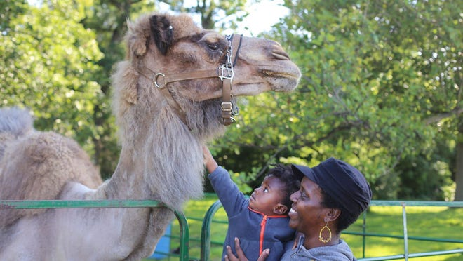 Krystal Pookrum, 32, of Highland Park holds her son Olaudah Pookrum, 1, so that he can pet a 29-year-old camel named Gunther of Reed City during Metro Youth Day 2015 on Belle Isle.
