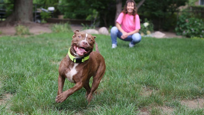 Communities would be prohibited from enacting ordinances that ban specific breeds of dogs under a bill being weighed by the House of Representatives.