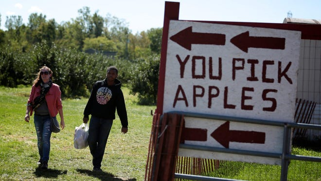 Martel Hollins, 23, and Cynthia Zilch, 22, both of Downriver, MI, apple pick at Apple Charlie's South Huron Orchards and Cider Mill on Tuesday, September 27, 2016, in New Boston, MI.