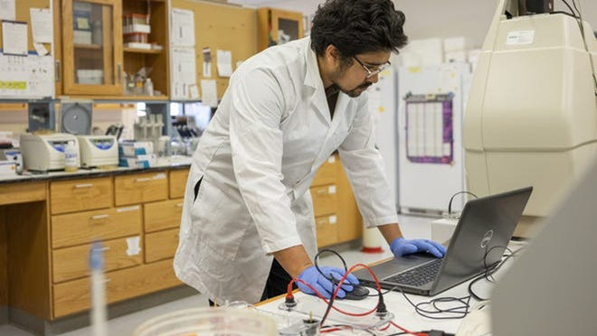 Jacob Toth works in the lab at Surge Laboratory at Cornell's Geneva campus.