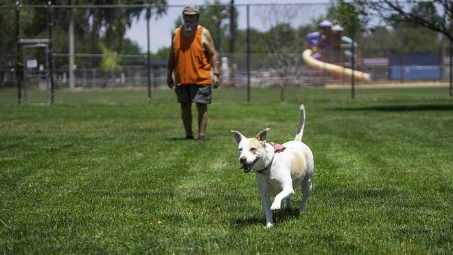 Kali chases after a ball thrown by Tony Montoya at the reopened City Park Dog Park on Friday.