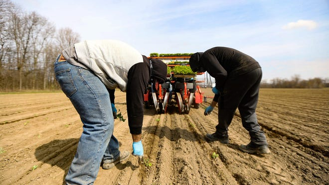 A federal judge on Friday refused to block a requirement that Michigan's migrant farm workers get tested for the coronavirus, rejecting claims that it violates the rights of Hispanics.