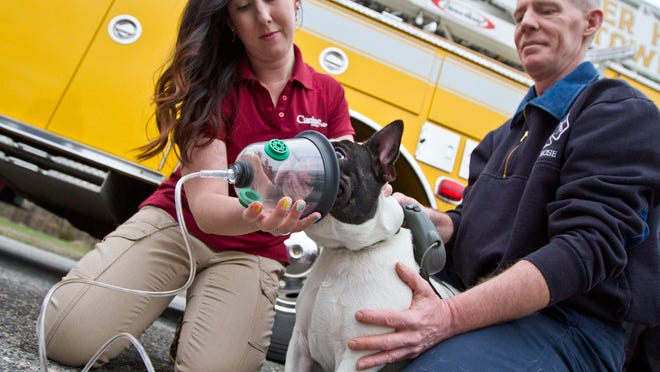 Alison Henry, Monmouth County Rep for Canine Company, and Kevin Donnelly, fire company member, place a mask on the muzzle of Brewyn, a French Bulldog. Brick's Pioneer Hose Fire Company No.1 received dog oxygen masks from Canine Company who donated the masks and gave a demonstration on how to use them.
