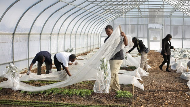From left, students Isiah Wilkins, Jwaun Champion, Patrick Lewellen, Ocean Hunter and teacher Linda George work in the Drew school's greenhouse, from which they produce greens for sale as part of the horticulture program at the Charles R. Drew Transition Center in Detroit on Thursday, Nov. 21, 2014.