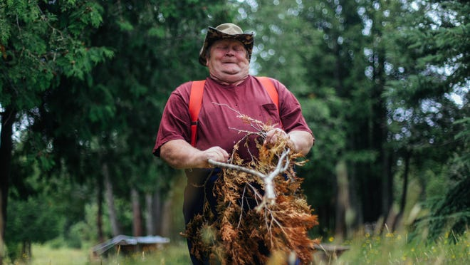 Richard Hiltunen of Kearsarge shows signs of struggle as a branch he uses to demonstrate dowsing pulls toward the ground to mark the sign of water from an underground river flowing beneath the Keweenaw Vortex behind Prospector's Paradise in Allouez.
