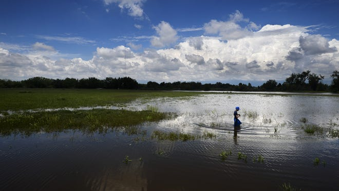Brooks Thatcher, 9, wades across a flooded field as the Cache la Poudre River spills over its banks and into Eastman Park on  Sunday, May 25, 2014, in Windsor. Brooks was looking for fish that swam into the field.