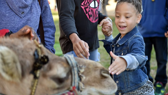 Raegan Jones, 5, pets Frank the camel Saturday afternoon during Jackson's Most Incredible Christmas Fest on West Street next to Thalia Mara Hall.
