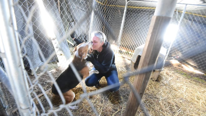 Inside a donated Army tent, Deborah Duran visits with one of the many rescued dogs located at Perry's Orphans Sanctuary on Wednesday, Feb. 3, 2016, one year after a fire destroyed the home of Perry Boore and killed several dogs. Boore passed away one month after the fire, but the sanctuary remains open today. Duran is Boore's daughter.